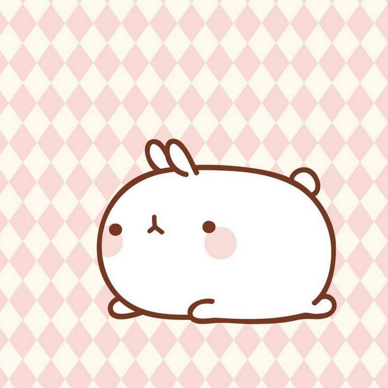 吃兔子的小萝卜