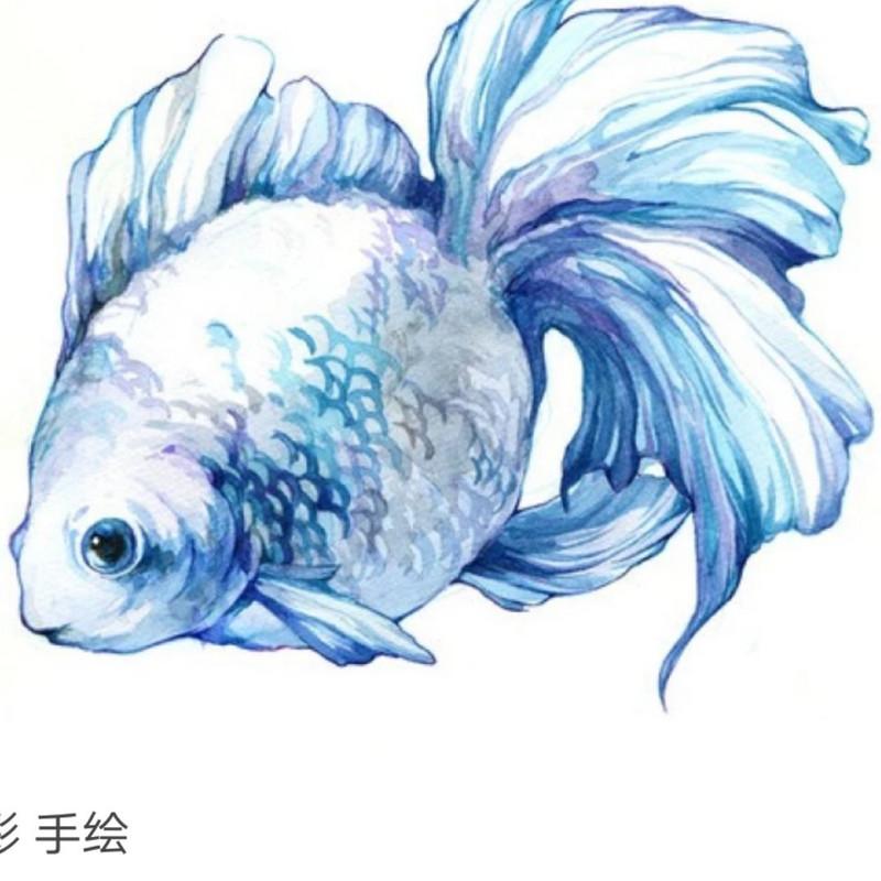 我是小江江