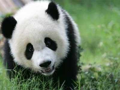 Pandaonline