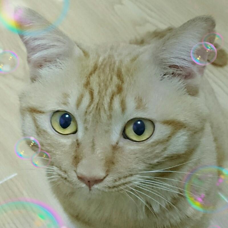 可爱小猫简笔画大少