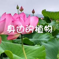 身边的植物