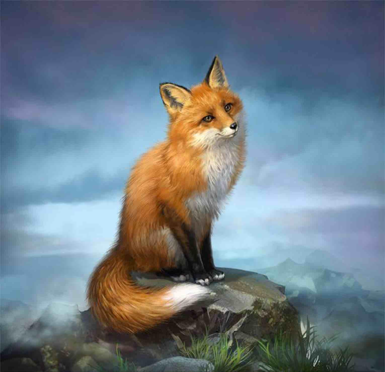 傻狐狸325