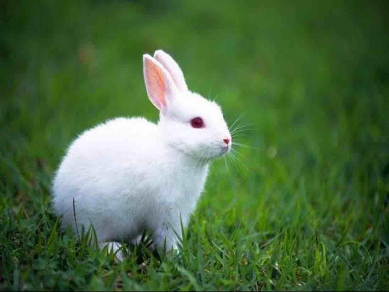 茕茕白兔⤶
