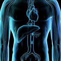 肝脏移植的过去、现在和未来