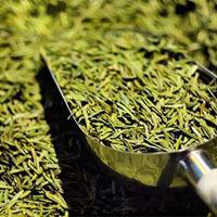 魅力中国茶
