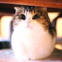 猫须减肥小台