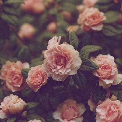 蔷薇花架下的风景