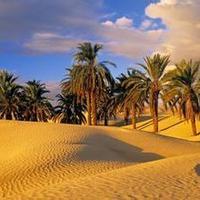 沙漠绿洲周易预测
