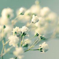 温柔就是能够对抗世间所有的坚硬