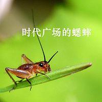 【樊华阿姨讲故事】时代广场的蟋蟀