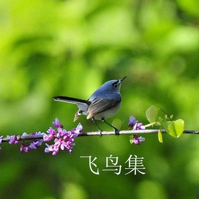 【逗逗读诗】飞鸟集