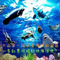 大山里一抹来自海洋的蓝色 ——多彩贵州城极地海洋世界