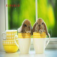 兔儿的直播大餐