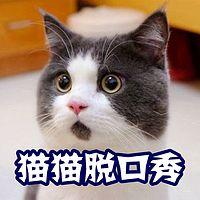 猫猫脱口秀2017