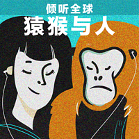 央广倾听全球特约节目《猿猴与人》
