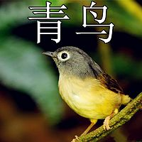 【晓月讲名著】青鸟