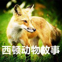 【晓月讲名著】西顿动物故事