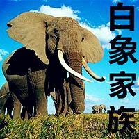 【晓月讲名著】《白象家族》