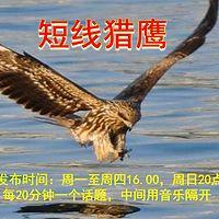 短线猎鹰(实盘)