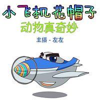 小飞机花帽子之动物真奇妙专业版