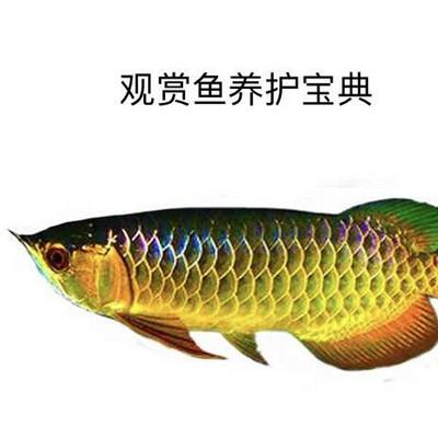 观赏鱼养护宝典