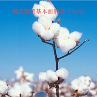 棉花期货基本面解读(入门)