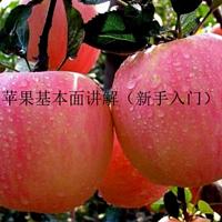 苹果基本面讲解(新手入门)
