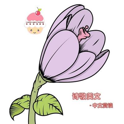 诗歌美文-樱桃乐活夜读