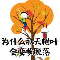 为什么秋天树叶会变黄脱落
