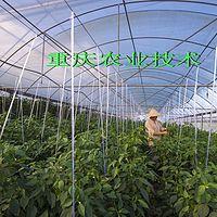 重庆农业技术
