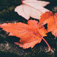 小林子:分手在秋季