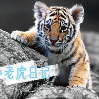 小老虎®日记