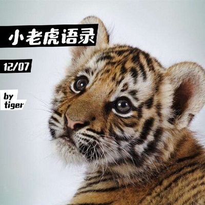 小老虎®语录