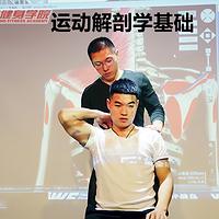 运动解剖学基础