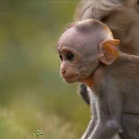 哄娃神器,睡前必听:小猕猴的奇幻大冒险