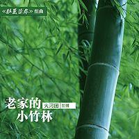 彭博:老家的小竹林