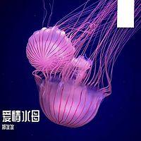 郑冰冰:爱情水母