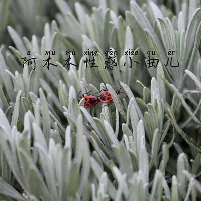 张酷竹君戴玲燕:阿木木性感小曲儿