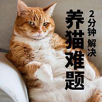 2分钟搞定养猫难题