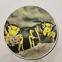 法布尔昆虫记之胡蜂