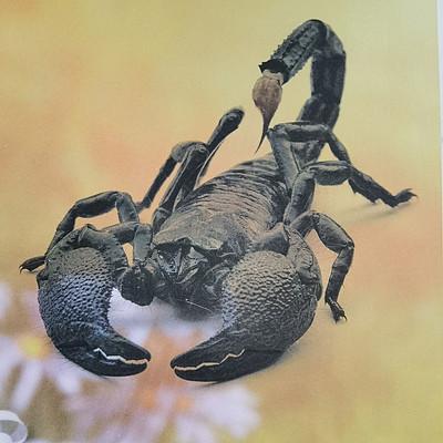 法布尔昆虫记之蝎子