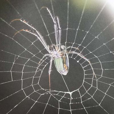 法布尔昆虫记之蜘蛛