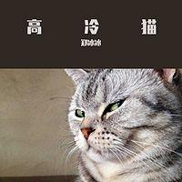 郑冰冰:高冷猫
