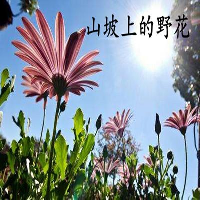山坡上的野花