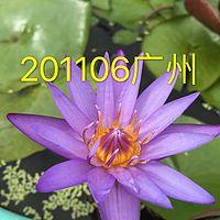 201106广州
