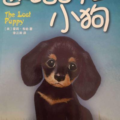 上学路上的故事丨迷路的小狗