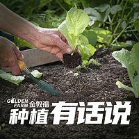 金敦福课堂-种植有话说