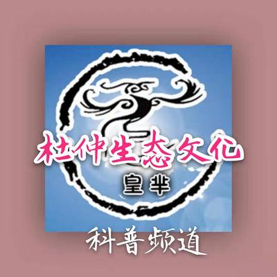 杜仲生态文化——皇芈科普
