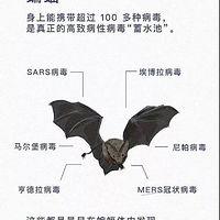 蝙蝠致人类的一封信