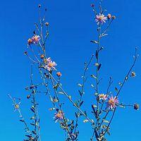 万物回春 · 万物声精选白噪音专辑